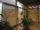 деревянные горизонтальные жалюзи на окнах в зимнем саду